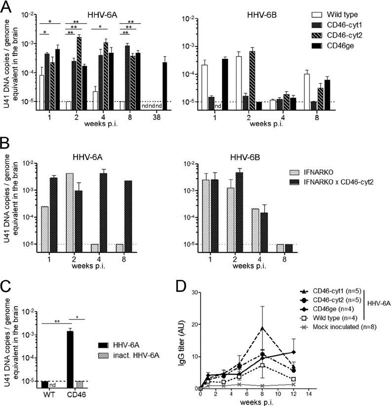 In vivo infection with HHV-6A or HHV-6B in different CD46