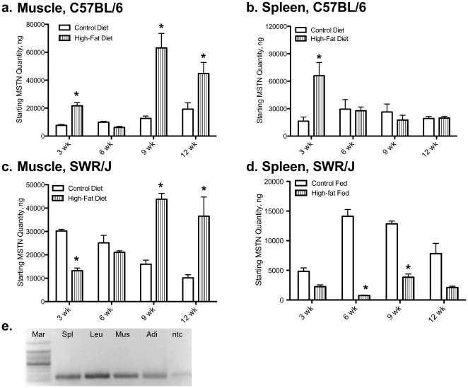 Molecular regulation of myostatin (MSTN) mRNA levels using