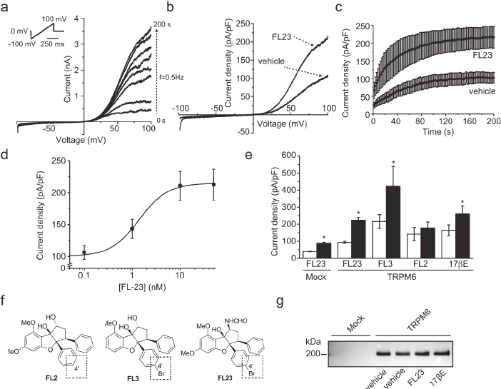 Flavaglines stimulate TRPM6 at nanomolar concentration. a