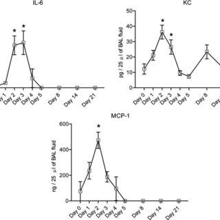 Measurement of cytokine levels in BAL fluid after elastase