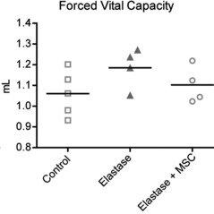 Lung function measurements 21 days after elastase