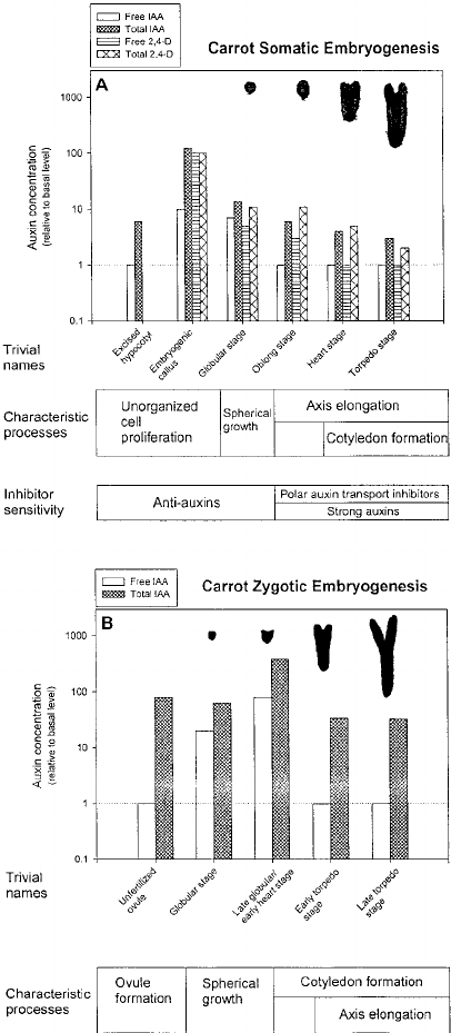 Biosynthesis, conjugation, catabolism and homeostasis of
