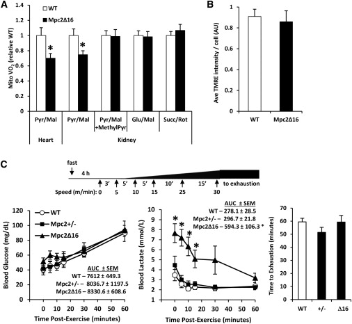 Mpc2Δ16 Mice Have a Diminished Capacity for Pyruvate