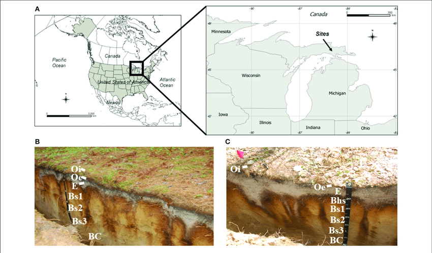 soil profile diagram of michigan sony xplod wire map showing the location sites in eastern upper peninsula usa a and schematic figures vertical profiles typically found