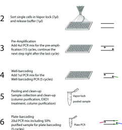 figure s1 schematic representation of the single cell id seq work flow the scid seq procedure entails crucial modifications compared to the original  [ 850 x 1234 Pixel ]