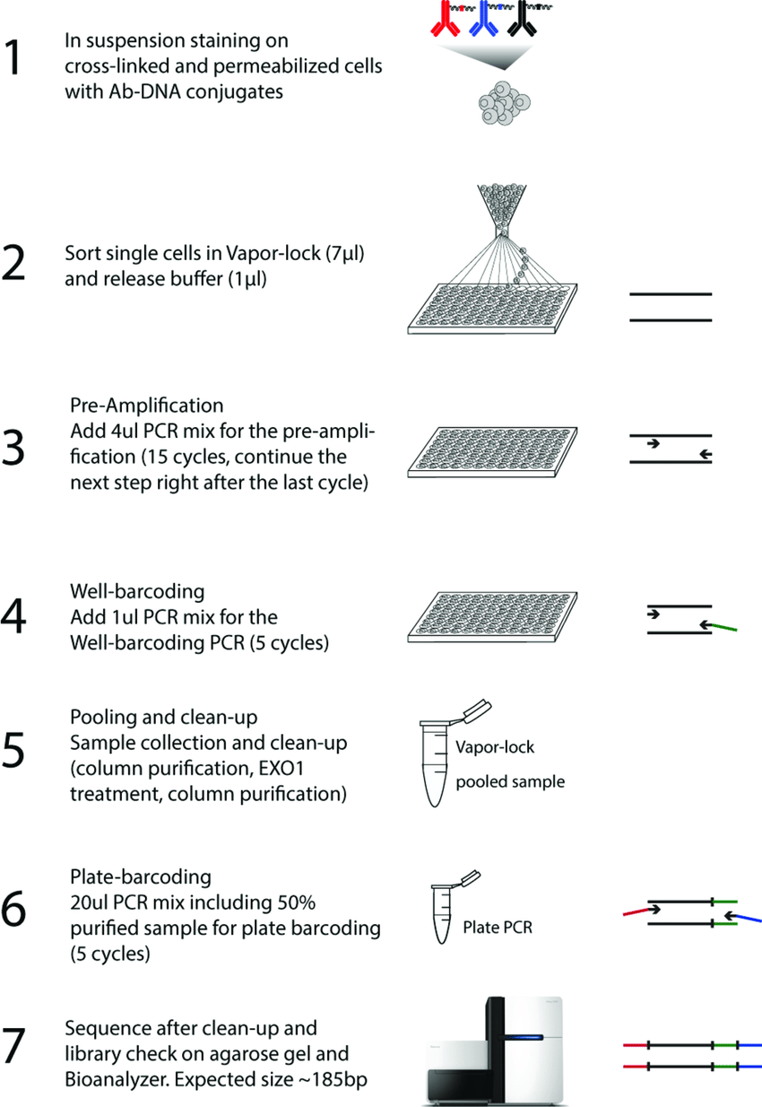 medium resolution of figure s1 schematic representation of the single cell id seq work flow the scid seq procedure entails crucial modifications compared to the original