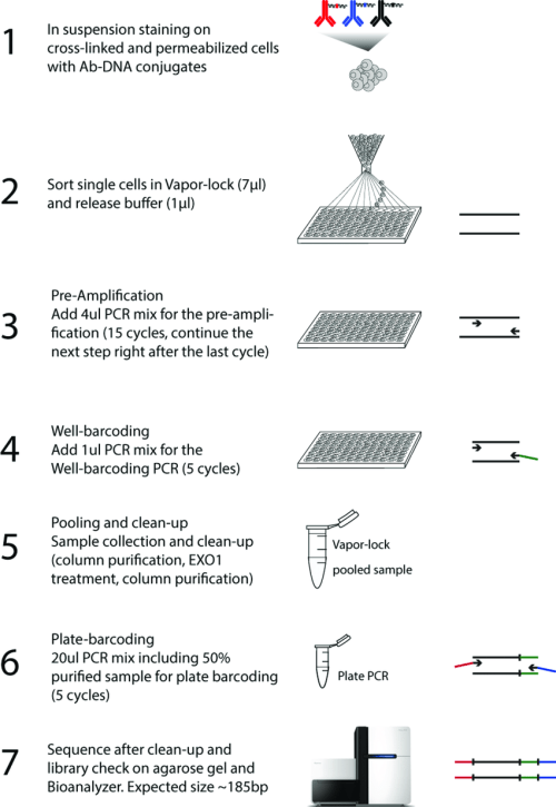 small resolution of figure s1 schematic representation of the single cell id seq work flow the scid seq procedure entails crucial modifications compared to the original