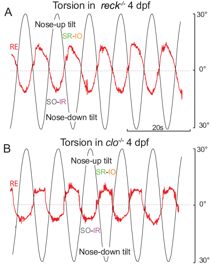 medium resolution of torsional eye movements in reck and cloche mutants a b torsional eye rotations in