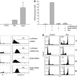 Stra6 intracellular localization after DNA damage. (a