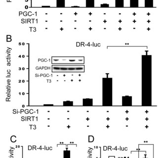 (A, B) Co-immunoprecipitation assays from 293T cells