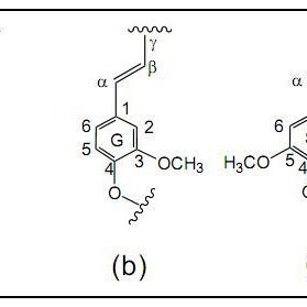 Fig. S1 Schematic of various lignin components (a) H-type