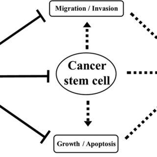 The Wnt/β-catenin signaling pathway regulates tumor