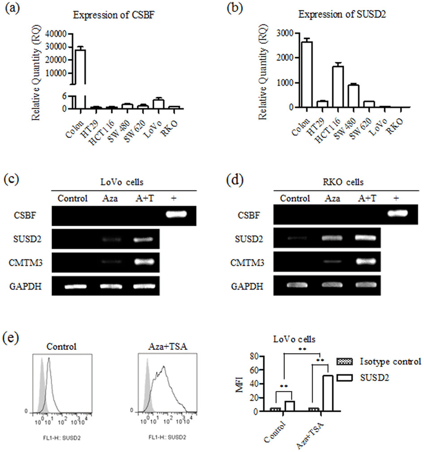 CSBF/C10orf99 and SUSD2 are decreased in colorectal cancer