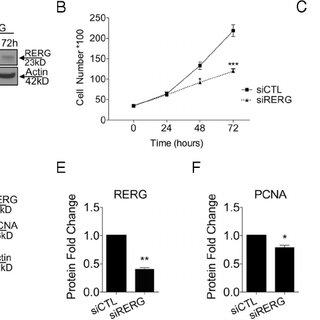 (PDF) ERβ- and Prostaglandin E2-Regulated Pathways