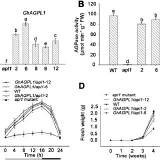(PDF) Silencing GhAGPL1 Reduces the Quality and Quantity