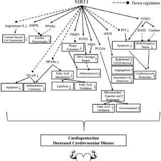 (PDF) Resveratrol: An Epigenetic Regulator of SIRT1– Is It