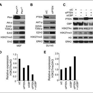 Immunohistochemical analysis of H3K27Ac, H3K27me3 and