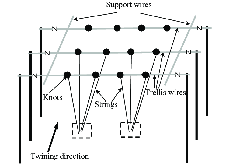 An illustration of trellis system and string twining