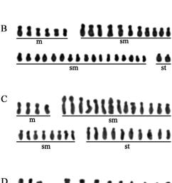 karyotypes of different lonicera cultivars part ii a lonicera download scientific diagram [ 850 x 1507 Pixel ]