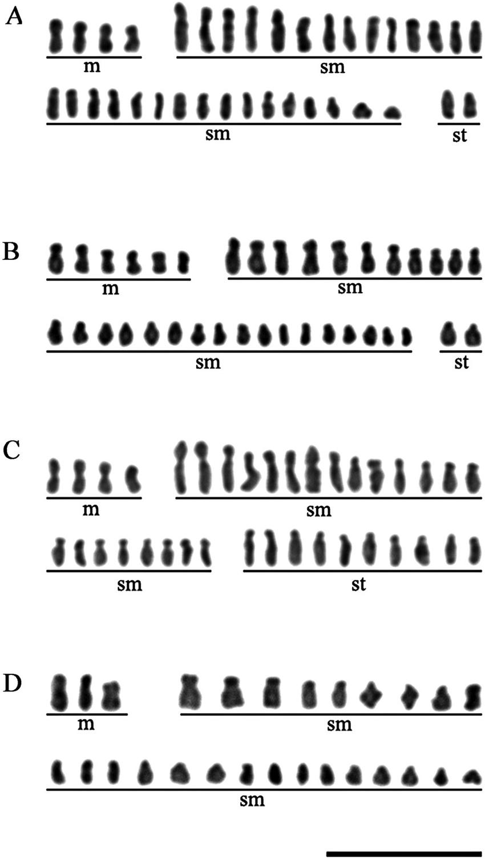 medium resolution of karyotypes of different lonicera cultivars part ii a lonicera download scientific diagram