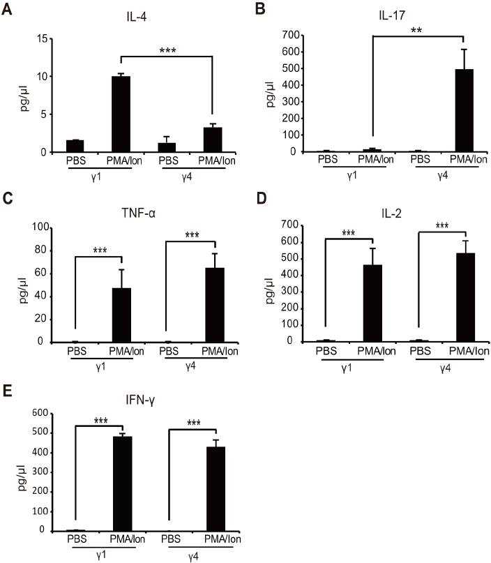 Cytokine expression. ELISA results of (A) IL-4 and (B) IL