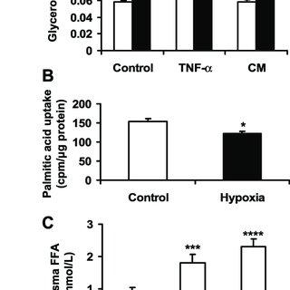 Hypoxia regulation of lipid metabolism. A: lipolysis was