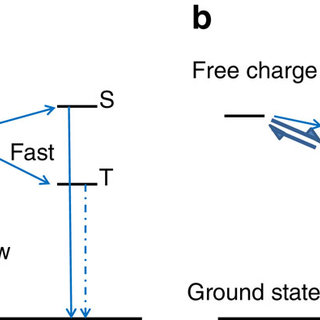 The spin polarization effect in an organic optoelectronic