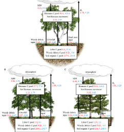 carbon budgets of three temperate forest ecosystems and their changes in the recent two decades  [ 850 x 1046 Pixel ]