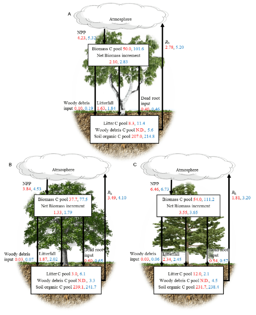 medium resolution of carbon budgets of three temperate forest ecosystems and their changes in the recent two decades
