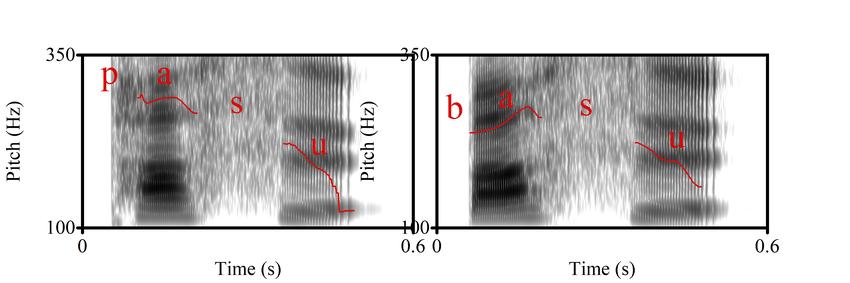 Illustration of F0 curves of /pasu/ vs. /basu/. both carrying an... | Download Scientific Diagram