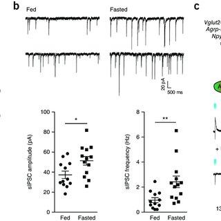 Regulation of feeding by ARC POMC versus ARC Vglut2