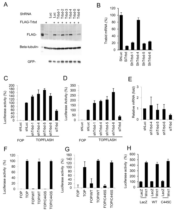 Effects of TRABID shRNAs or overexpression on Wnt reporter