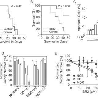 IBR2 reduces RAD51 protein level via proteasome-mediated