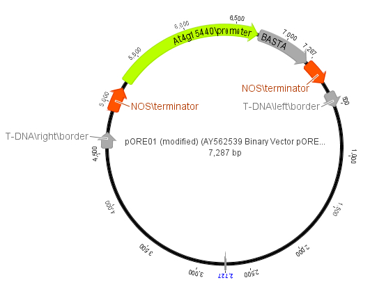Troubleshooting if the 35S promoter used in Hygromycin