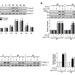 (PDF) Macrophages programmed by apoptotic cells inhibit