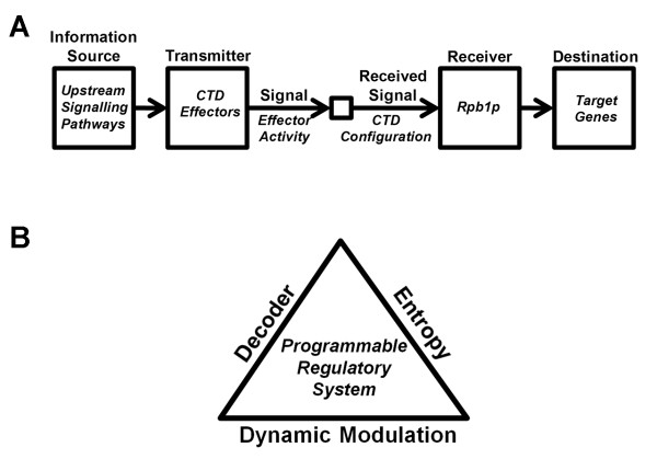 Harnessing entropy within the CTD to transmit a message