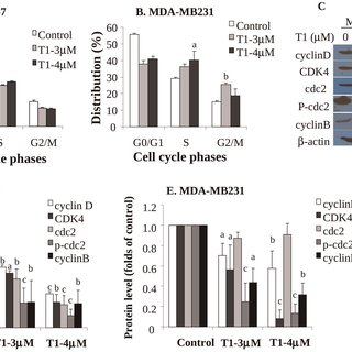 (PDF) Tanshinones Inhibit the Growth of Breast Cancer