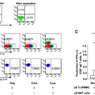 (PDF) TCR gamma delta(+)CD4(-)CD8(-) T Cells Suppress the