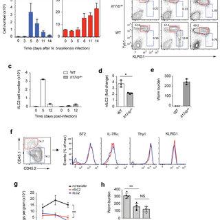 (PDF) IL-25-responsive, lineage-negative KLRG1 cells are
