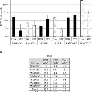 (A) Western blot analysis of 2 pancreatic cancer cell