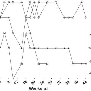 Histological findings. (A) Coalescing granulomas in hilar