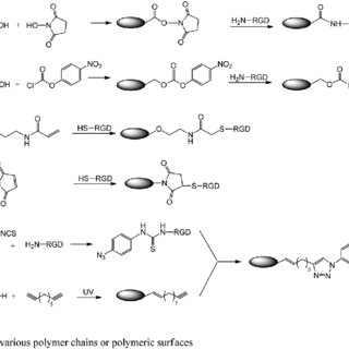 Schematic of PEGMA and/or DMAPS grafting polymerization