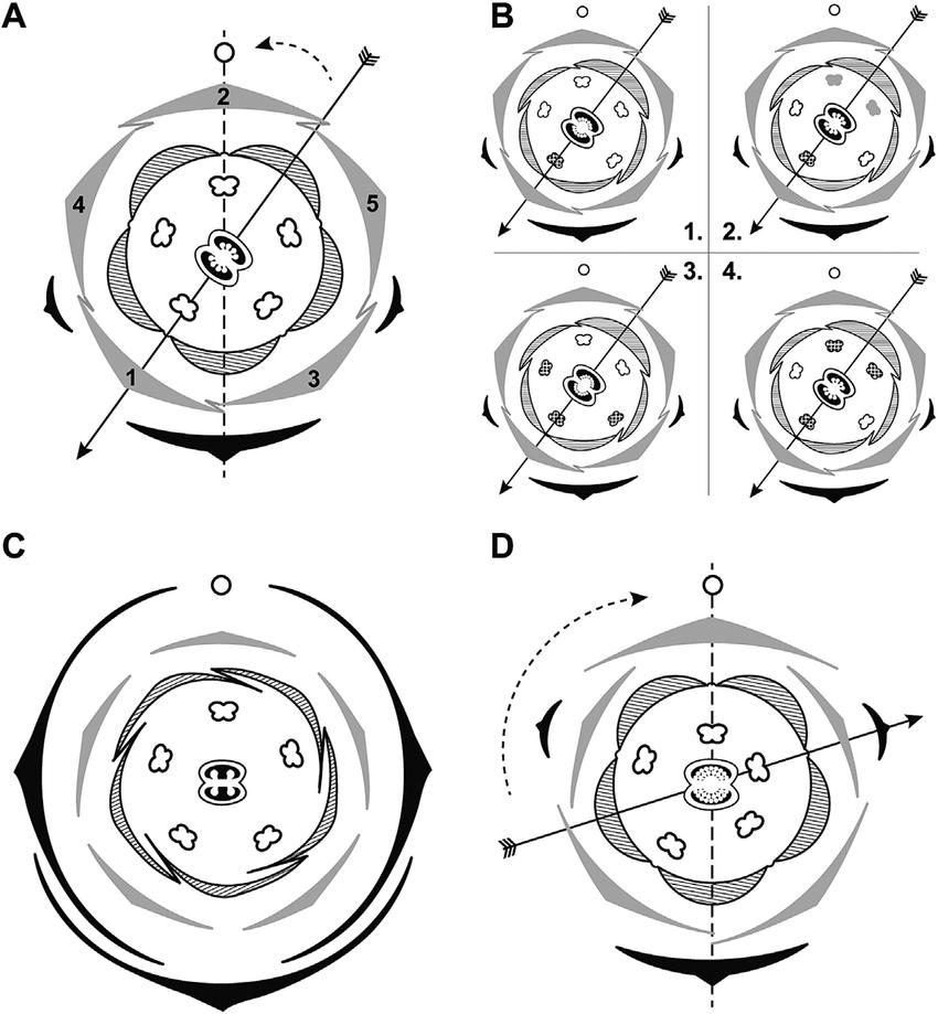 scientific flower diagrams