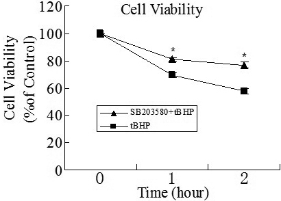 Detection of cell viability by MTT assay after tBHP