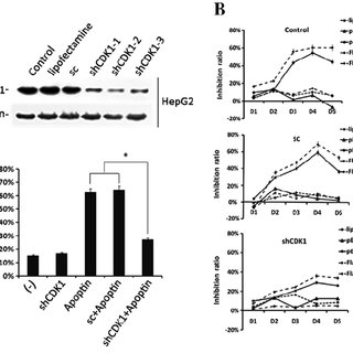 (PDF) The role of CDK1 in apoptin-induced apoptosis in