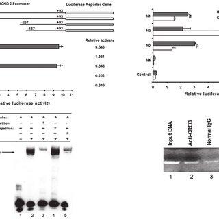 (PDF) Cyclic adenosine monophosphate response element