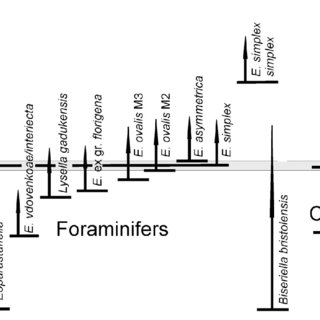 (PDF) Biostratigraphy, sequence stratigraphy and gamma-ray