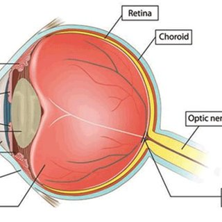 human eye parts diagram apac air conditioner wiring diagrams 1 main of the source www eyediologyopticians co uk