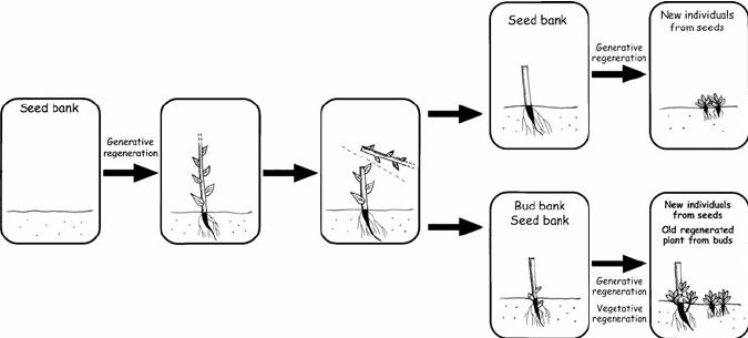 Diagram comparing regeneration after disturbance of a