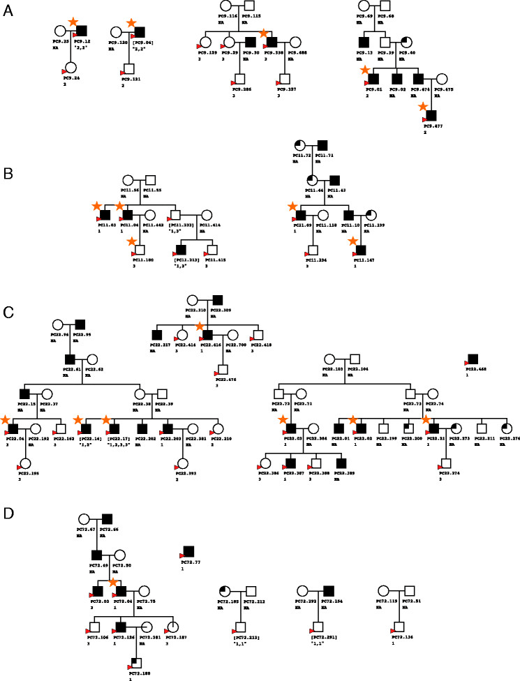 Selected pedigree clusters from four families from the